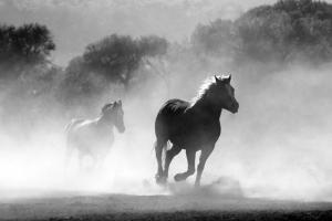 cavalli-corsa