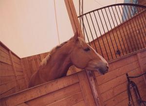 cavallo box