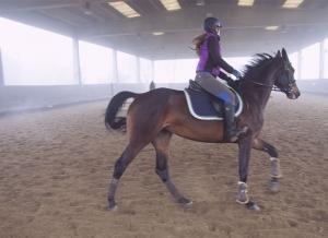 cavallo campo 2