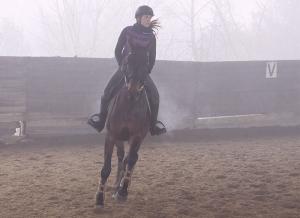 cavallo campo 4