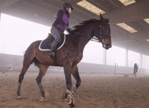 cavallo campo 5