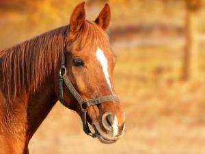 cavallo-dentro