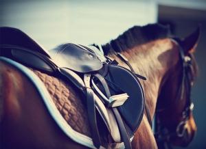 cavallo sella dettaglio