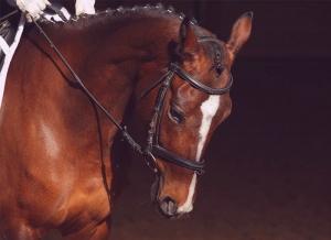 dettaglio-cavallo