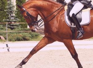 dettaglio-cavallo-fantino