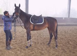 istruttore cavallo
