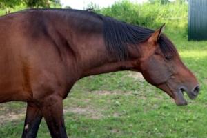 cavallo che comunica