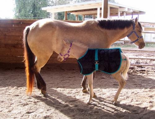 Coperta per cavallo: guida alla scelta