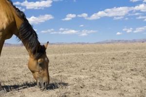 cavallo che saluta
