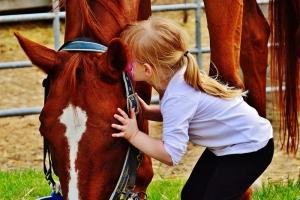 linguaggio del cavallo