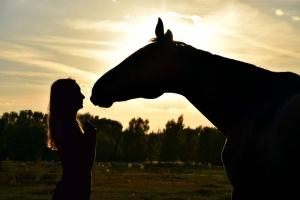 diventare amico del cavallo