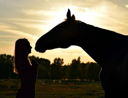 Diventare amico di un cavallo