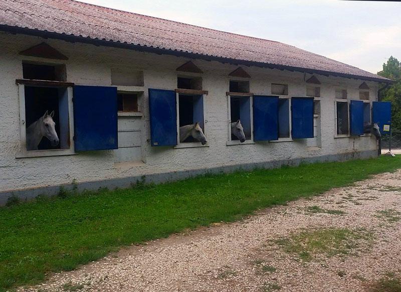 scuderizzazione pensione per cavalli lodi