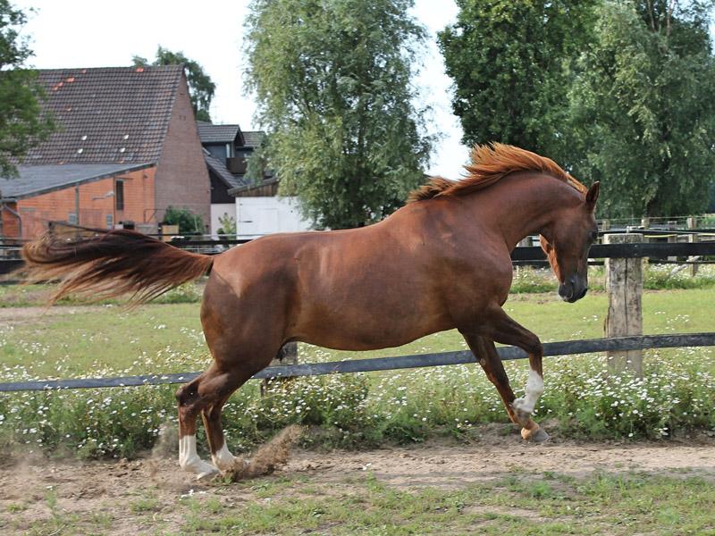 doma-cavalli-difficili