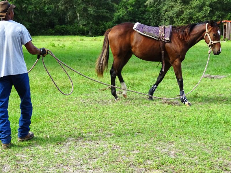doma_cavalli